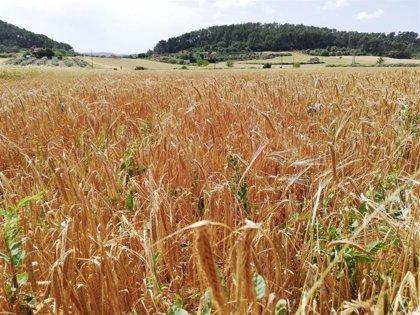 Cicytex publica un vídeo sobre el uso de imágenes satelitales para conocer la evolución de los cultivos