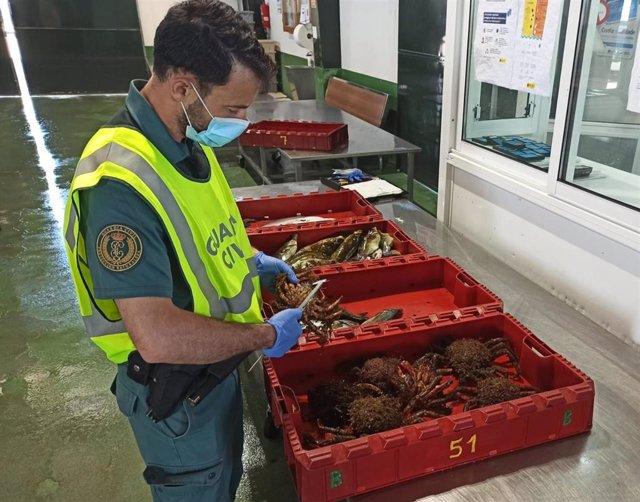 La Guardia Civil requisa en Baiona una partida de marisco y pescado extraído de forma ilegal.