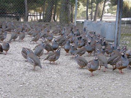 C-LM y Andalucía, regiones con más granjas de animales en cautividad para la caza