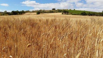 Un estudio de la PAC en Aragón muestra la insuficiencia de la renta agraria