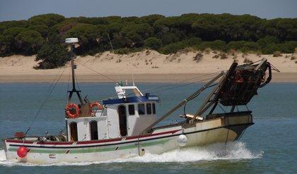 Publicada en BOJA la orden de las ayudas para el sector de la chirla del Golfo de Cádiz