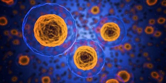 Descubren el modo 'todoterreno' que permite que las células se muevan libremente
