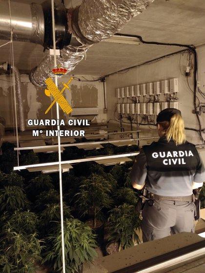 Detenido un hombre en Roquetas de Mar (Almería) tras hallarle en posesión de 150 plantas de marihuana en un piso