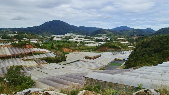 Tierra deforestada en Malasia.