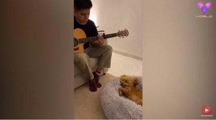 Las canciones de cuna no solo funcionan con los bebés: así se duerme este perro