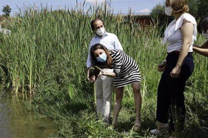 El renaturalizado río Manzanares cuenta desde hoy con 8 nuevos ejemplares de galápago leproso