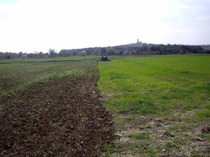 La payesía de Baleares recibirá ayudas de hasta el 50% sobre la producción perdida por los desastres naturales de 2019