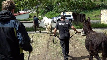 Retiran seis cabezas de ganado de propietarios que utilizaban sin autorización zonas de pasto en La Arboleda