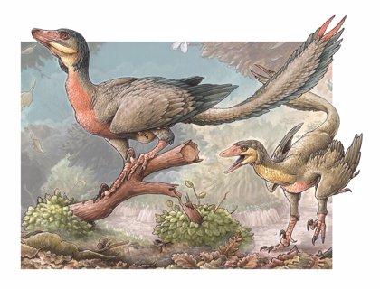 Pequeño dinosaurio carnívoro con alas descubierto en la Patagonia argentina