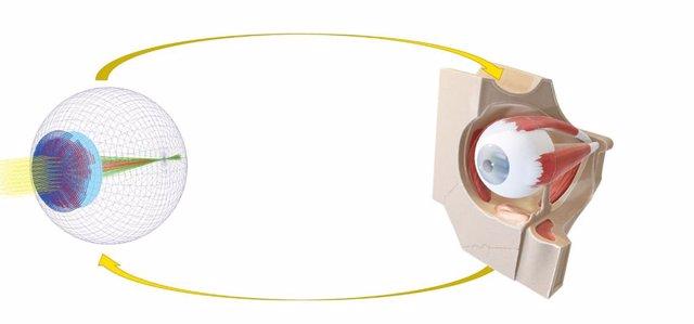 Un ojo digital en 3D que simula la calidad visual