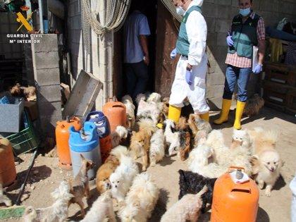 El CMPA acoge a 40 perros y 150 cachorros localizados por el SEPRONA en un finca de Maella