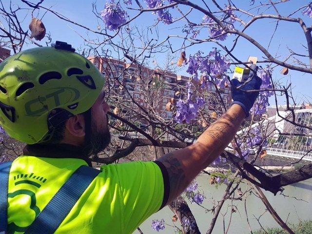 El Ayuntamiento de Murcia utiliza insectos para conservar el arbolado del municipio