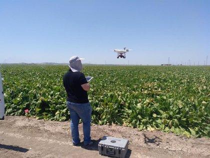 Ifapa y la US investigan con drones para medir el riego de los cultivos con imágenes térmicas y hacerlos más sostenibles