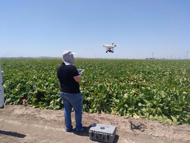 Ifapa y la US investigan con drones para medir el riego de los cultivos con imág