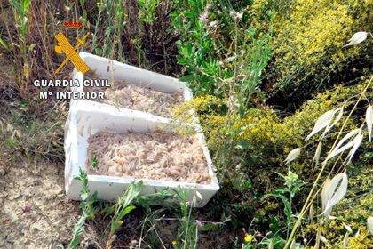 Intervenidas dos cajas de pescado inmaduro en Úbeda (Jaén) halladas en un coche de Granada tras sufrir un accidente