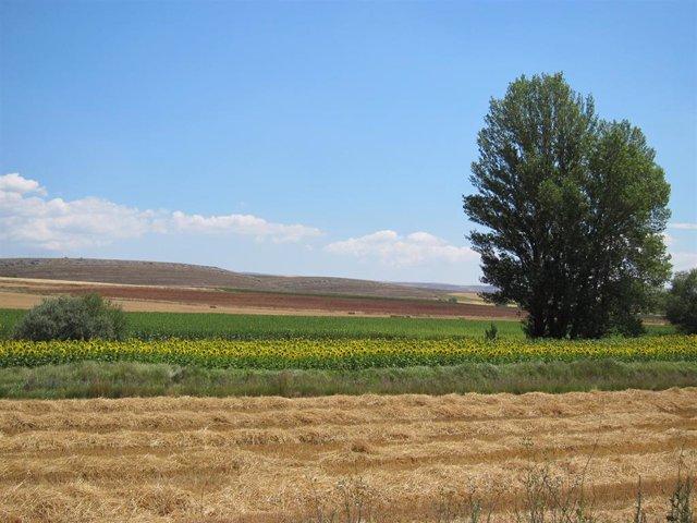 Campos De Cultivo, Turismo Rural