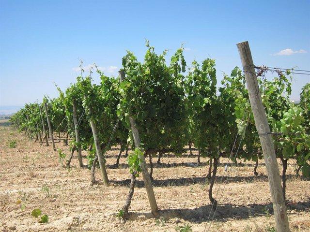 Agro.- El vino catalán suma cerca de un millón de seguidores en Instagram