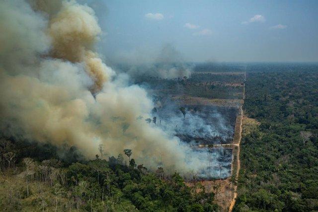 Brasil.- Investigadores alertan de que una zona como tres veces Sao Paulo podría