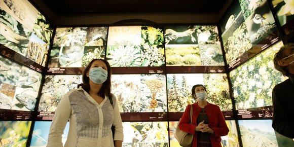 9. El Cabildo de Tenerife lanza un programa de 'mentorización' que permite acceder a lugares exclusivos de la red de museos