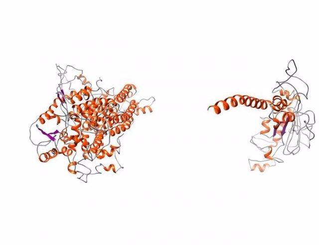 Una enfermedad recién descubierta puede conducir a un mejor tratamiento de la fibrosis quística.