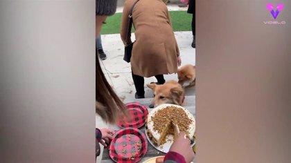 Este es el divertido momento en que un perro hambriento roba una porción de tarta de cumpleaños