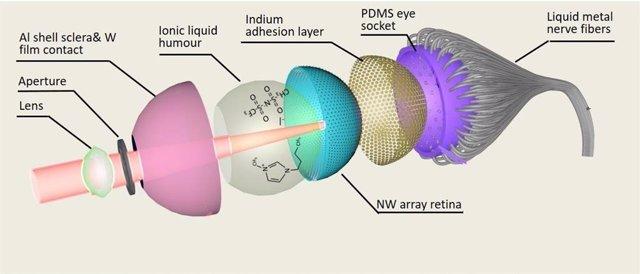 La estructura del ojo electroquímico (EC-Eye) desarrollada