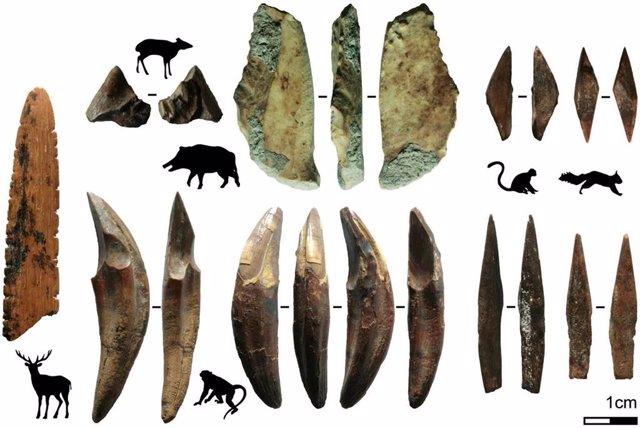 Restos óseos de especies cazadas analizadas en el estudio