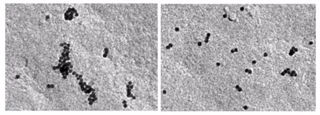 Imágenes de microscopía electrónica de la formación de nanooligómeros del receptor de las células T (TCR) en células que expresan CCR5 (izquierda), frente a la formación en células deficientes en CCR5 (derecha).
