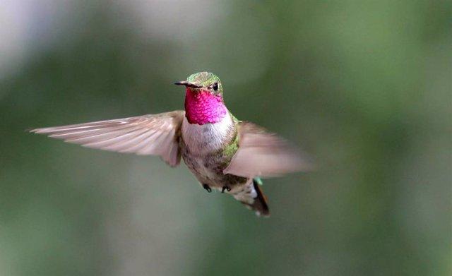 Los colibríes ven colores que los humanos solo pueden imaginar