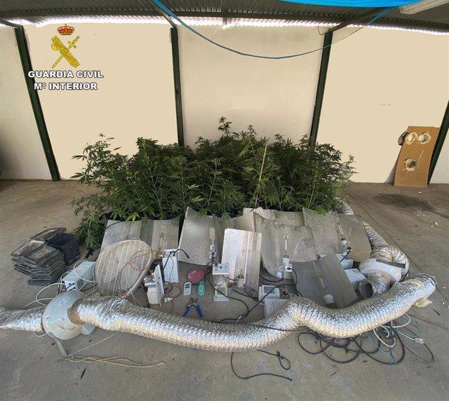 Plantas de marihuana y material intervenido por la Guardia Civil en Palma del Río.