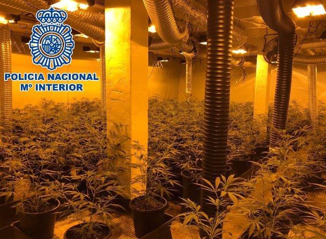 Cultivo de marihuana en Marbella