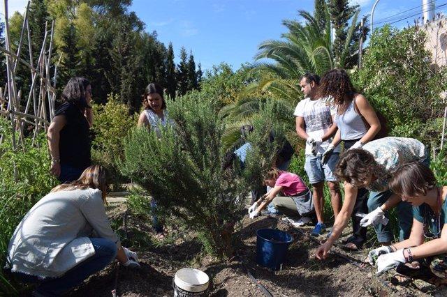 Huerto social en La Noria de la Diputacion de Málaga