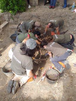 El equipo de técnicos que ha trabajado en la excavación