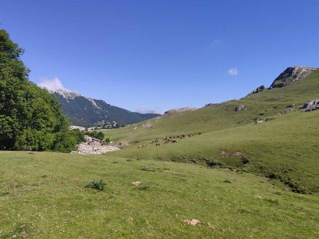 Cielos despejados en Euskadi
