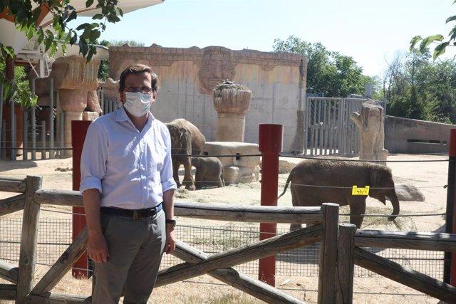 El alcalde de Madrid, José Luis Martínez-Almeida, junto a unos elefantes durante su visita al Zoo
