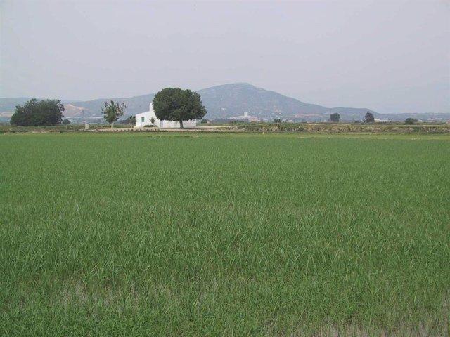 Camp de cultiu