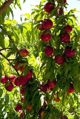 Andalucía mantiene en el primer cuatrimestre de 2020 su liderazgo en la exportación de frutas y hortalizas.