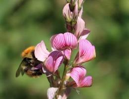 Las plantas aumentan la variabilidad de sus rasgos reproductivos para adaptarse