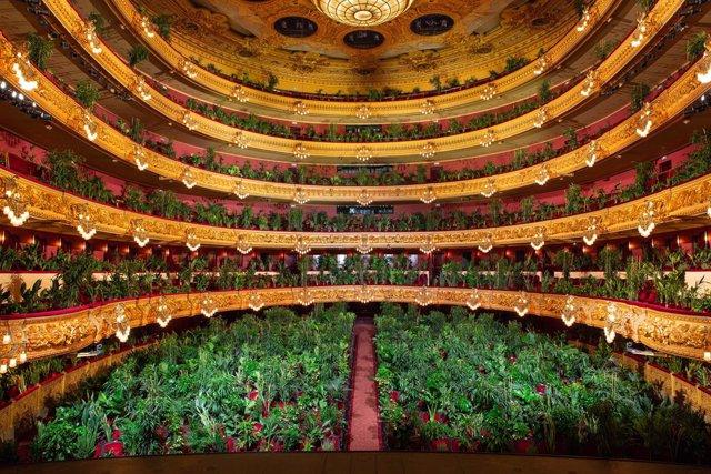 El artista Eugenio Ampudia da un concierto en el Liceu para un público de 2.292 plantas