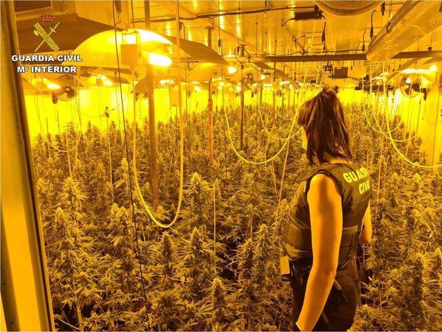 La Guardia Civil desmantela una organización criminal que distribuía marihuana en latas de tomate