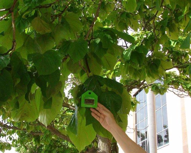 Caja para insectos en árboles para luchar contra la plaga del pulgón.