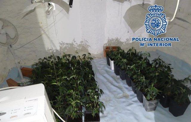 Plantación de marihuana intervenida en una habitación-cueva de Granada