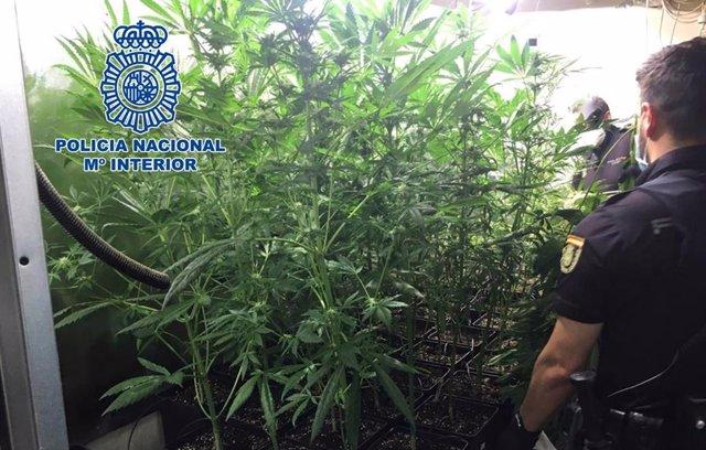 Un agente de la Policía en la plantación desmantelada