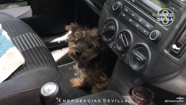 Perro encerrado en un coche durante cuatro horas a pleno sol con 40 grados en Sevilla