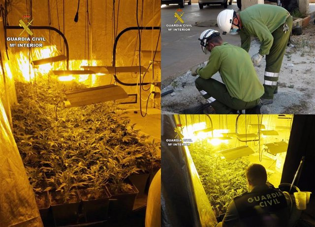 La Guardia Civil Detiene A Un Vecino De Totana Que Ocultaba Una Plantación De Marihuana En Un Establecimiento De Compra Venta De Coches Usados