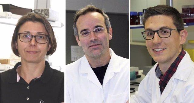 Investigadores buscan una diana terapéutica para enfermedades autoinmunes