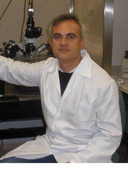 Sevilla.-Una investigación señala que consumir anfetamina varias semanas altera