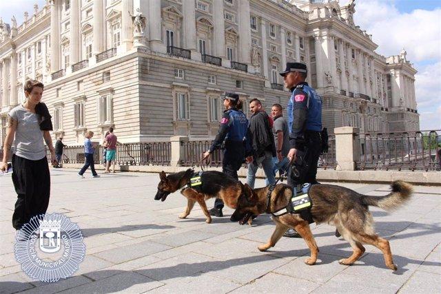 Imagen de recuro de la Policía Municipal de Madrid.