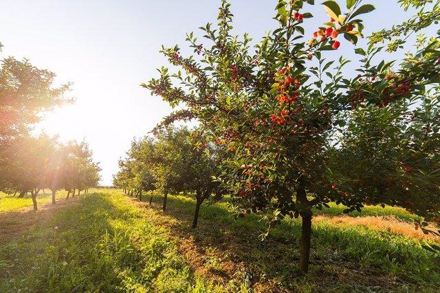 Paisaje soleado de Extremadura
