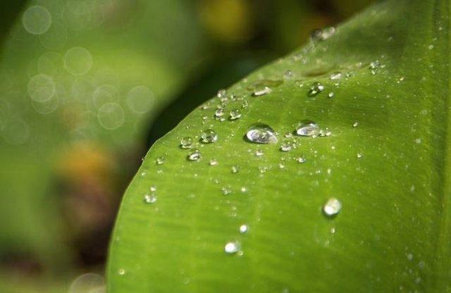Se descubre la razón por la que las plantas son verdes